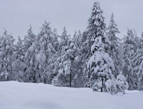 Ar verta keliauti į Laplandiją su Interlux Travel?